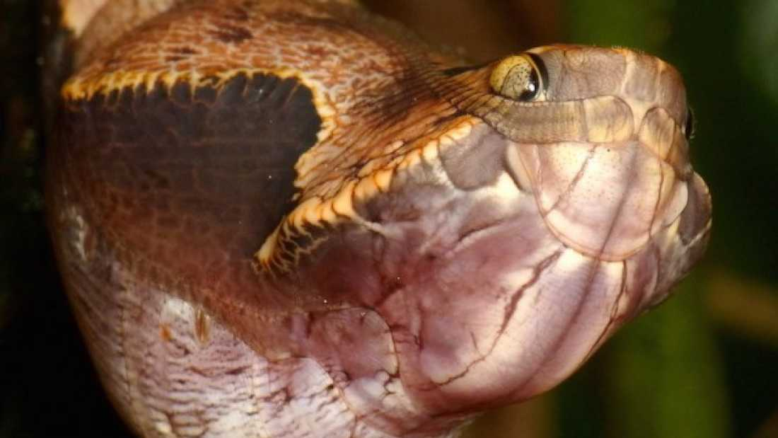 250 Believe It Or Not, This Isn't A Snake. So What Is It?