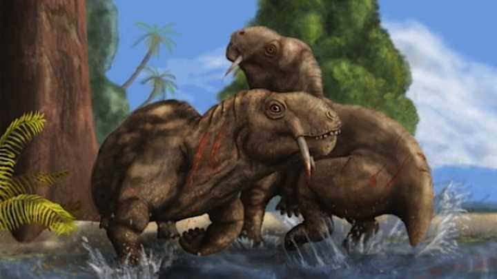 Prehistoric Herbivore Used Saber Like Teeth For Combat