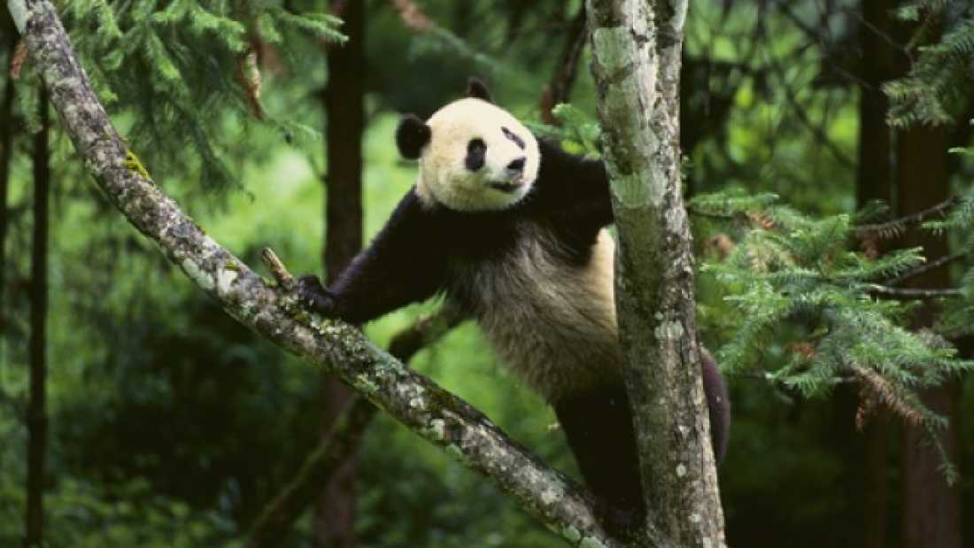 503 Forests In China Are Coming Back