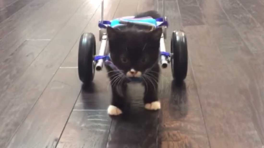 2922 Students Create 3D-Printed Wheelchair For Disabled Kitten