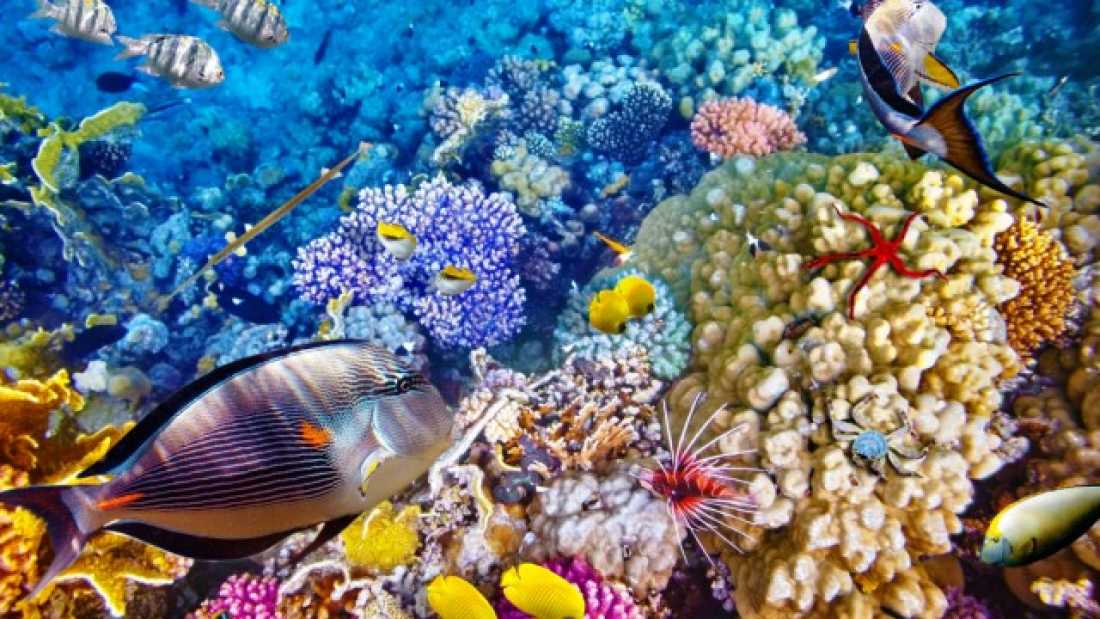 1371 Great Barrier Reef Is Infected With Herpes-Like Virus