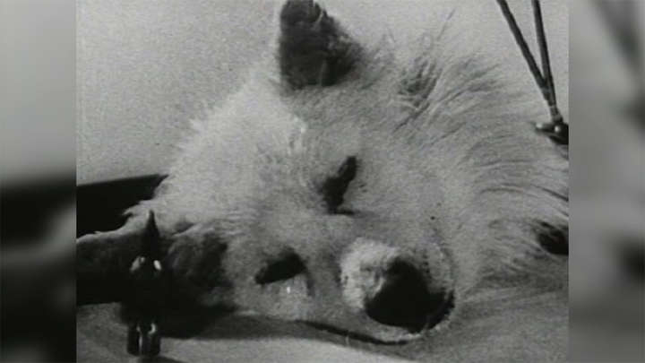 Footage Emerges Of Soviet Scientists In The 1920s Reviving A Decapitated Dog's Head