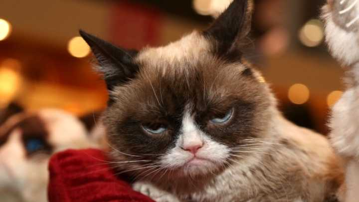 Pictures Of Pissed Off Cats