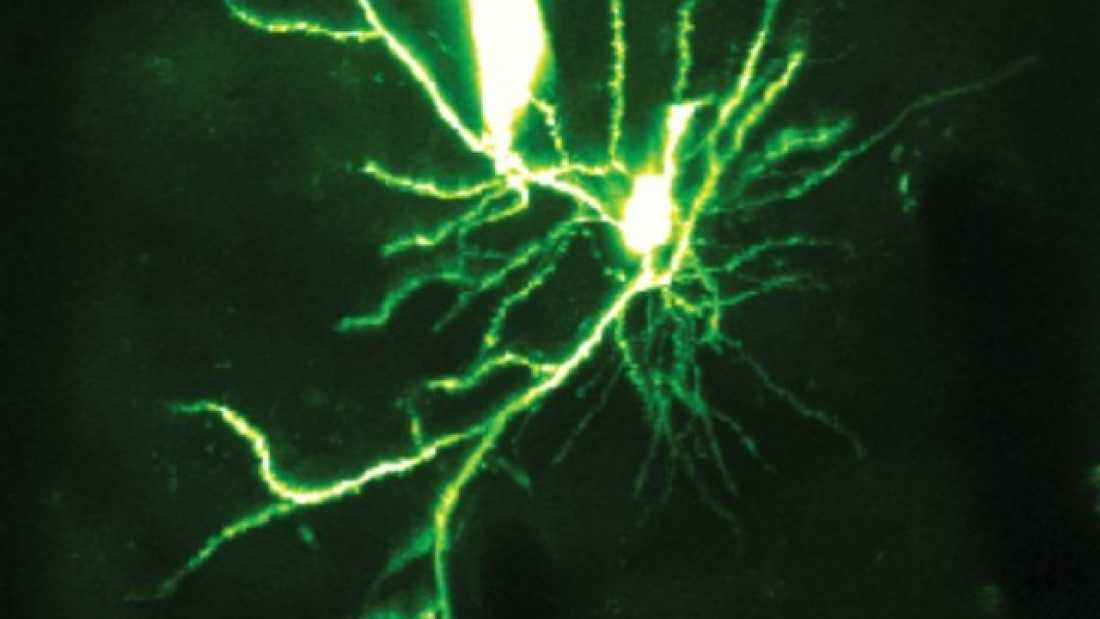 73 Neuronal Dendrites Can Process Information Solo