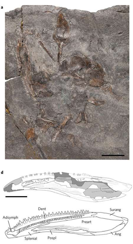 content-1481046786-early-fossil-tetrapod