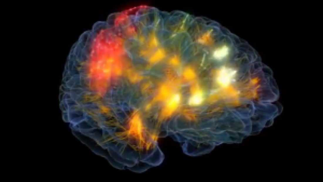 429 Scientists Develop A Way To Visualise The Brain In Real-Time