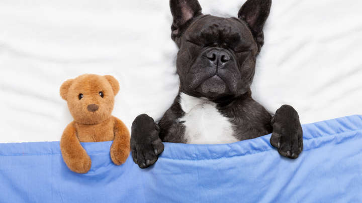 56 Dreams About Dogs What Does It Mean When You Dream