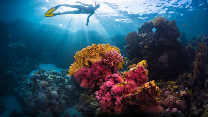 Saving What We Can – Fifty Shades Of Coral To Be Preserved ...