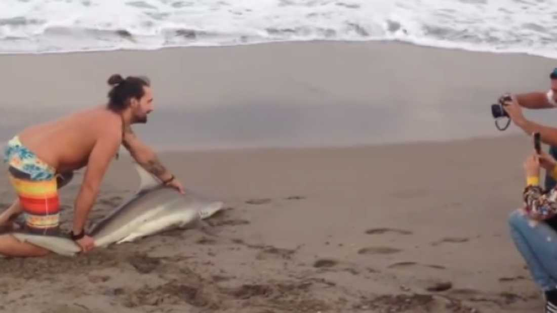 1482 Man Pulls Shark From The Sea To Pose For Photographs