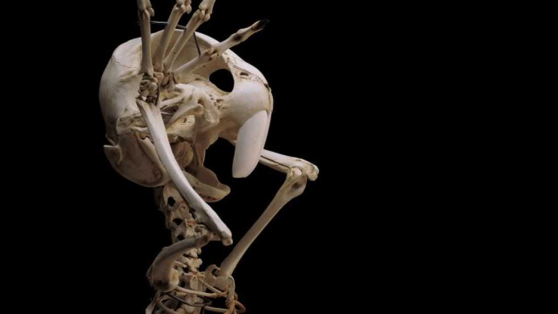 75 This Is What The Skeletons Of Famous Cartoon Characters Would Look Like