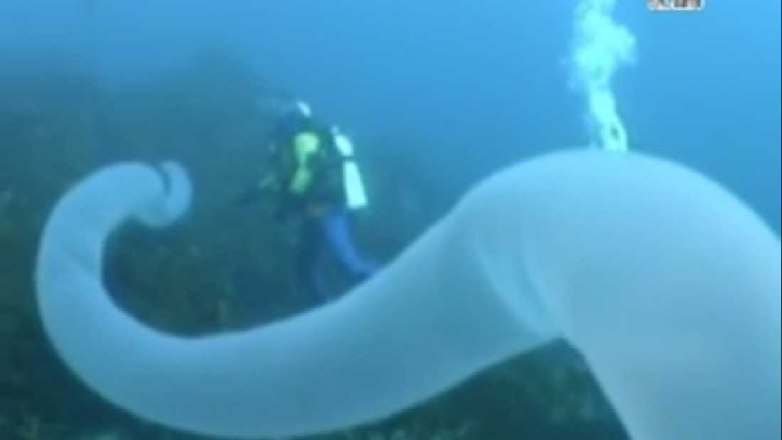 1448 Giant, Tubular Creature Caught On Camera Under The Sea