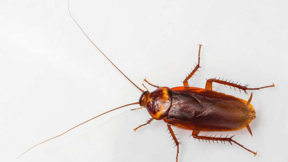 Roach found living in Florida woman's ear