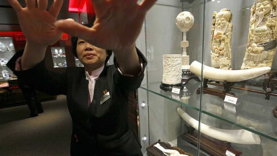 653 Hong Kong To Ban All Trade In Ivory
