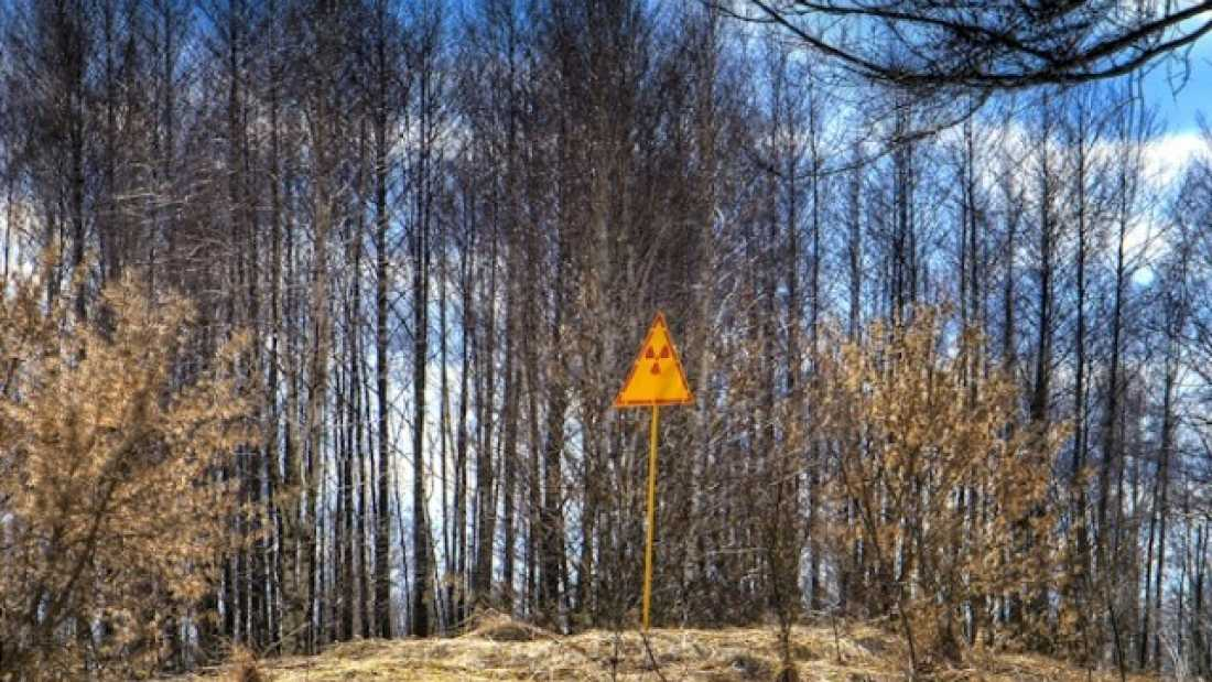 457 The dead trees and fallen leaves near Chernobyl aren't decaying