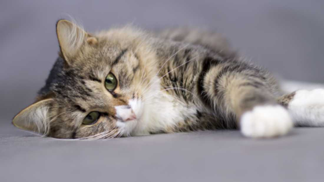 606 Science Shows that Watching Cat Videos is Good for You