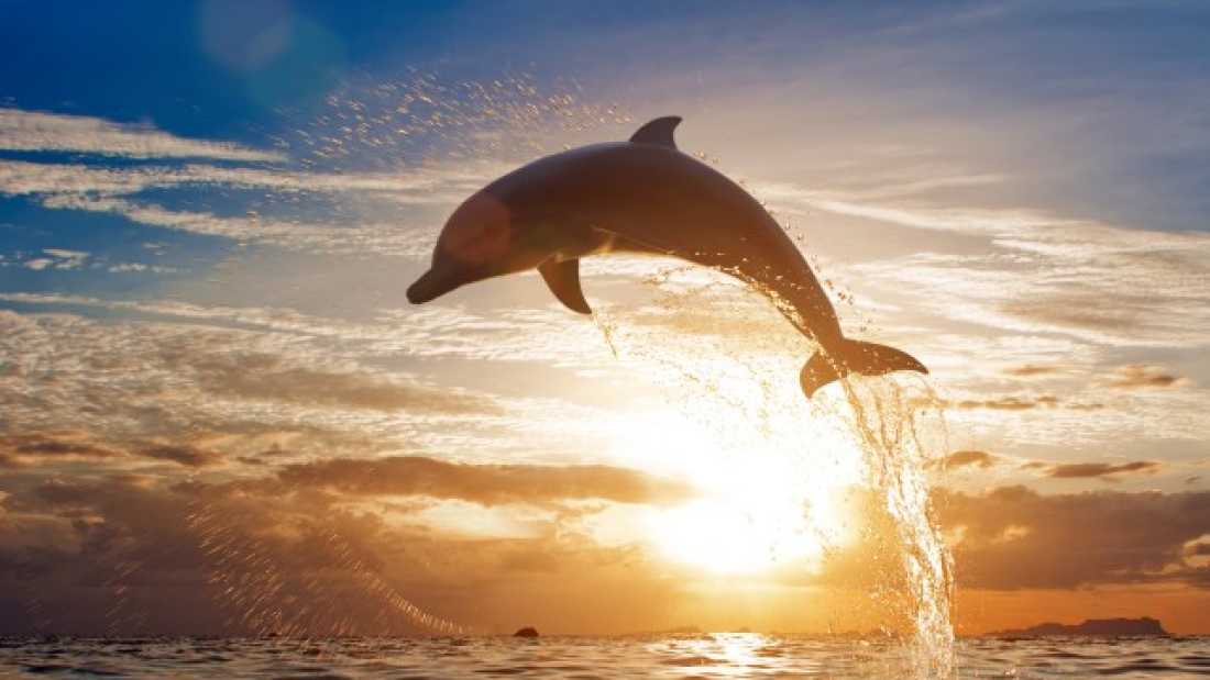 1157 Dolphins Spotted Riding Whales Off The Coast Of Hawaii