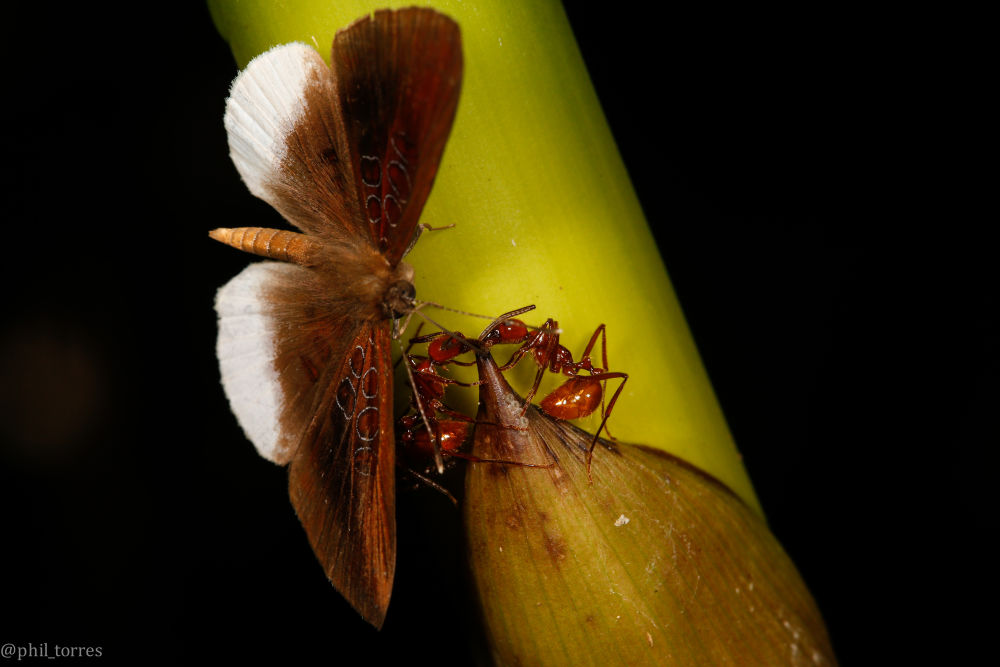 content-1466168897-12-butterfly-ants-fee