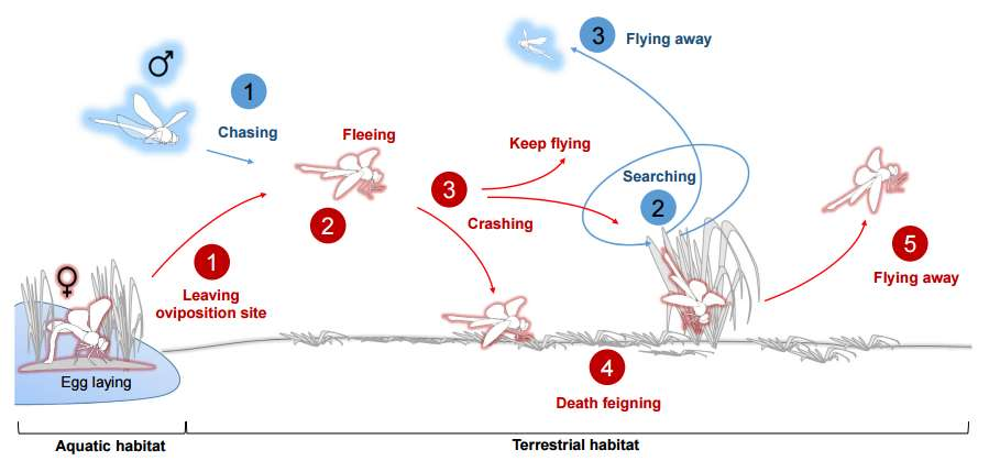content-1493376218-dragonfly-diagram.jpg