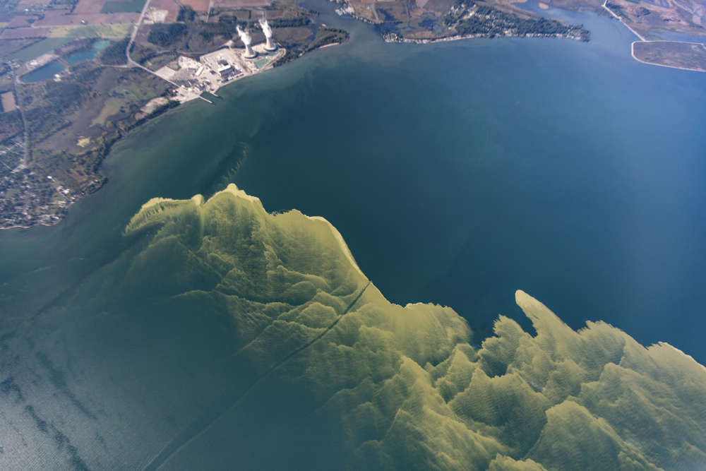 lake erie has turned a ghostly green and that s very bad news