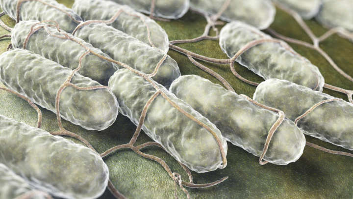 Could Friendly Bacteria Be Used To Treat Cancer?