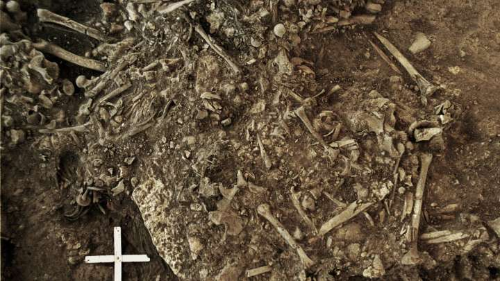 Earliest Strain Of Plague Discovered Could Explain Stone Age Europe's Population Crash