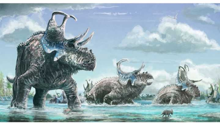 Two New Horned Dinosaur Discoveries Reveal A Striking Evolutionary Divide