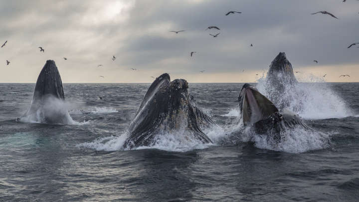 Monterey Bay University >> Fossilized Barnacles Reveal Whales Have Been Migrating