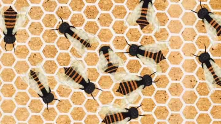 Why Do Honey Bees Make Hexagonal Honeycomb?