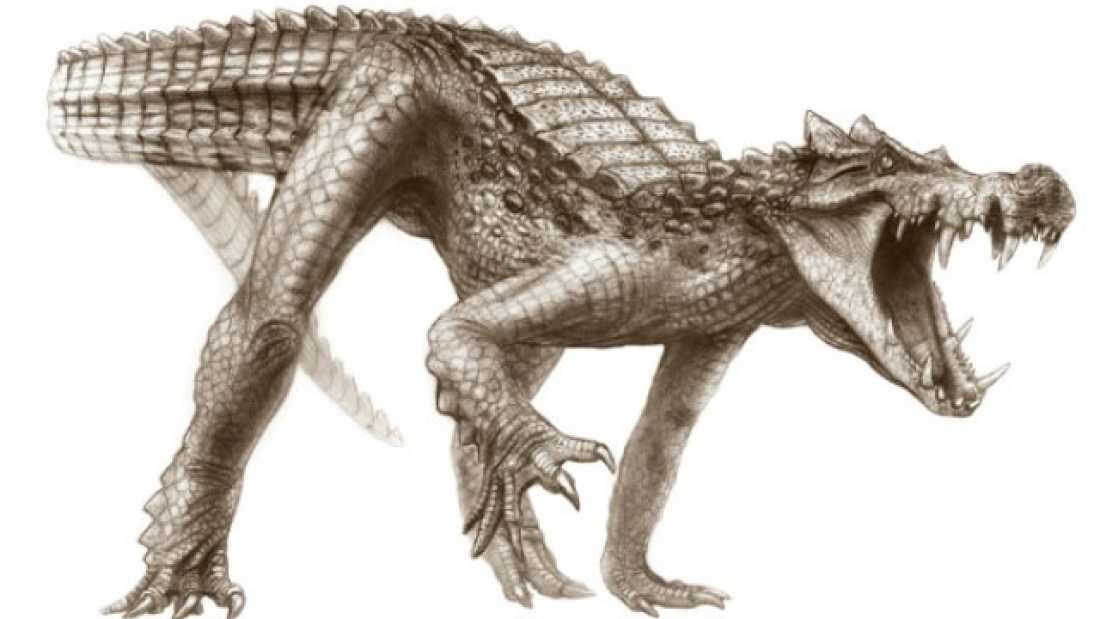extra_large-1464360350-98-galloping-crocodiles-ate-dinosaurs-in-north-africa.jpg