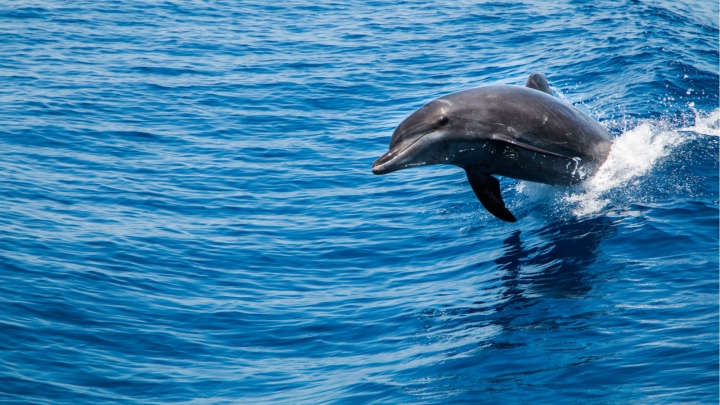 Here's Why You Shouldn't Put A Beached Dolphin Back Into The Sea