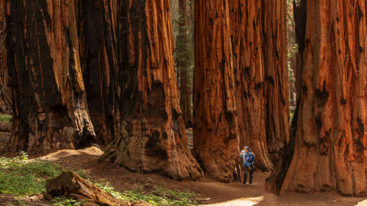 """""""Living Library"""" Seeks To Restore Some Of The World's Largest Trees"""