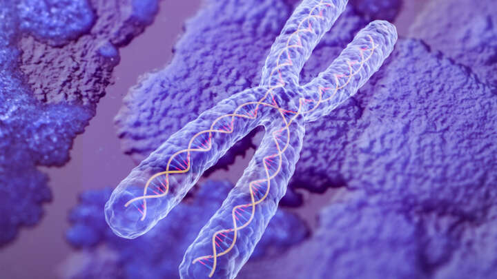 Researchers Have Fully Sequenced A Chromosome For The First Time - IFLScience