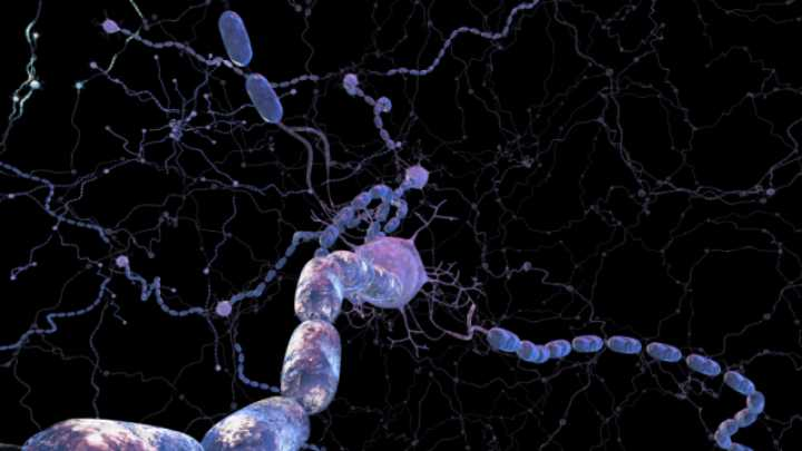 New Drugs Could Reverse Multiple Sclerosis Nerve Damage Iflscience