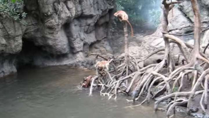 Video Shows Otters Drown And Kill A Monkey At A Zoo