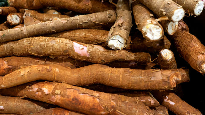 Genetically Modified Super-Charged Cassava Could Help Stamp Out Malnourishment In Africa