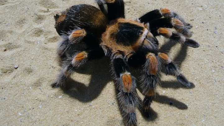 Only Half of All Spiders Have Been Discovered