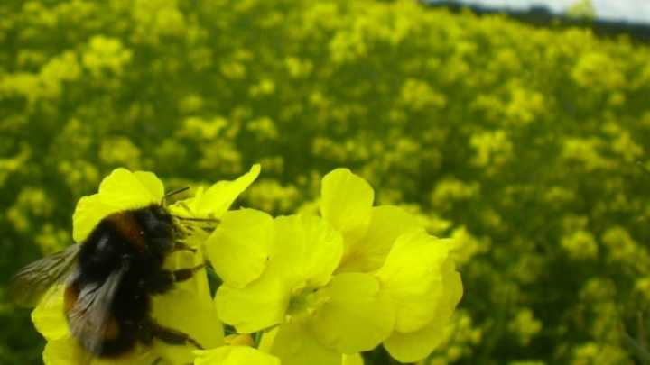 Bees Prefer Nectar Laced with Pesticides