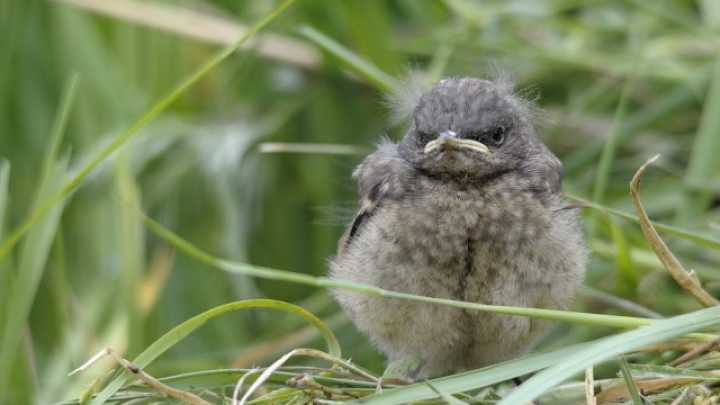 Here's What You Should Do If You Find A Baby Bird Out Of Its Nest