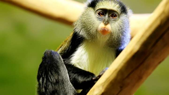 Scientists Translate Monkey Sounds To English