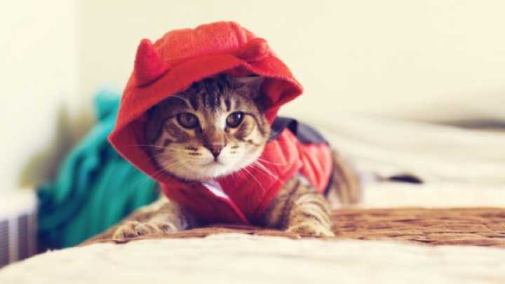 Study Reveals That Your Cat Is Basically A Tiny Lion