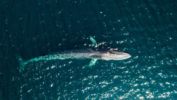 Scientists Use Whale Songs To Reveal Hidden Features Of The Sea Floor - IFLScience