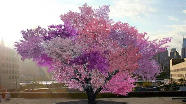 This Tree Can Grow Over 40 Different Kinds Of Fruit