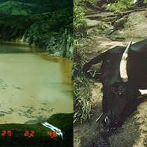 On August 22, 1986, Thousands Of People And Animals Within 15 Miles Of Lake Nyos Were Found Dead