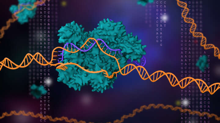 The new discovery of CRISPR can easily turn genes on and off