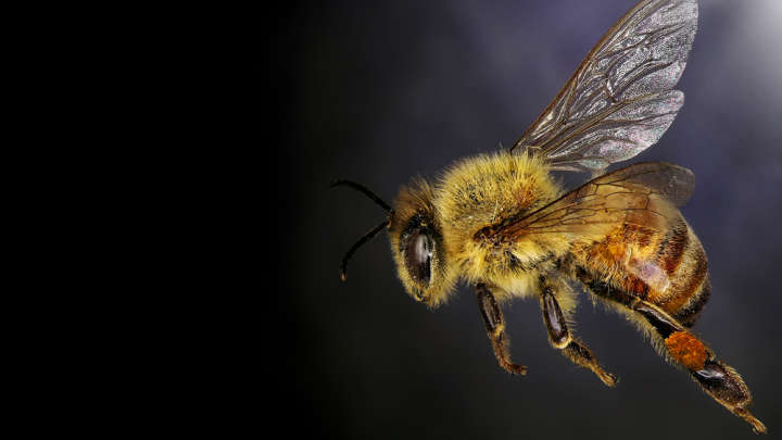 Something Strange Happened To Bees Across The US During Last Year's Solar Eclipse