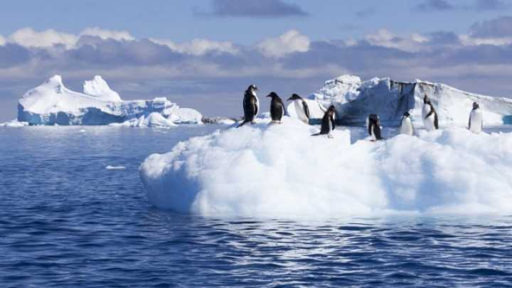 Polar Invasion: How Plants And Animals Would Colonise An ...