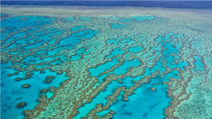 tourism is declining on the great barrier reef  take a