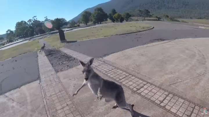 Paraglider Lands, Gets Socked In The Face By A Kangaroo – And It's All Captured On Cam