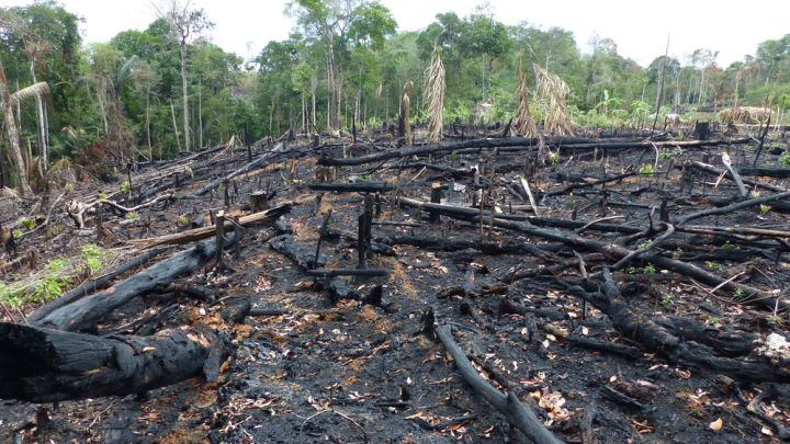 Amazon Rainforest Could Be Set For An Intense Wildfire Season Driven By El Niño