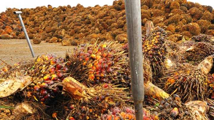 How Did Palm Oil Become Such A Problem — And What Can We Do About It?